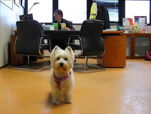 Mascotas Purina PETS@WORK PURINA_5
